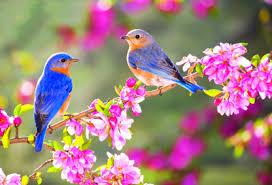 آمدن بهار مبارک