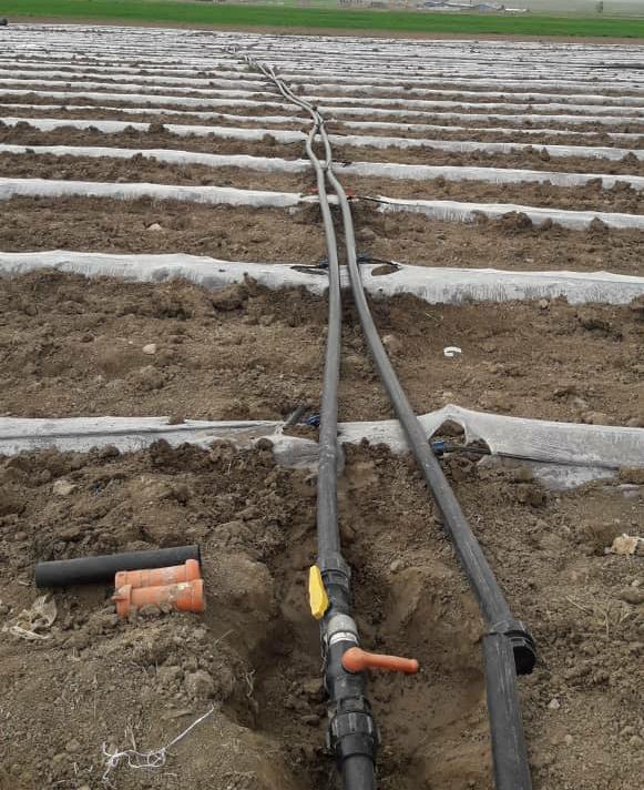 هلیلان الگوی صرفه جویی در مصرف آب کشاورزی می شود