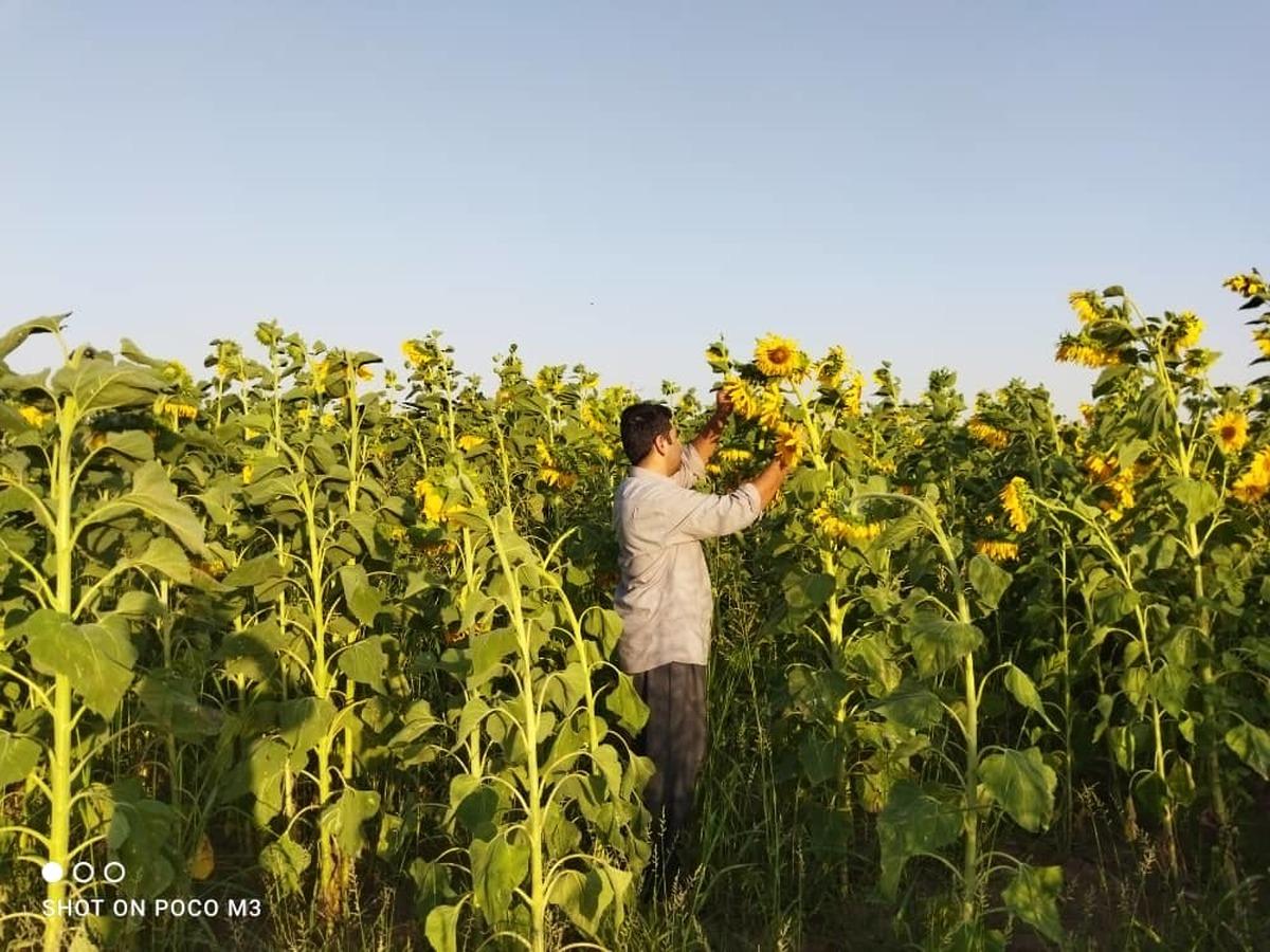جوان هلیلانی ایده های خوبی برای تولیدات کشاورزی دارد